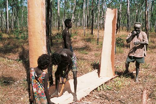 Aboriginal People beim Schneiden und Schälen der Rinde